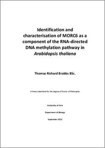 Dna methylation thesis